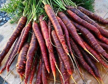 Purple Haze Heirloom Carrots