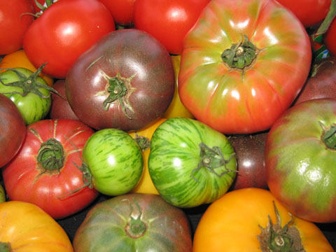 Vibrant and Colorful Heirloom Tomato